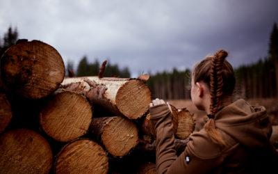 Der Harzer Wald im Wandel: Von der Fichten-Monokultur zum naturnahen Mischwald