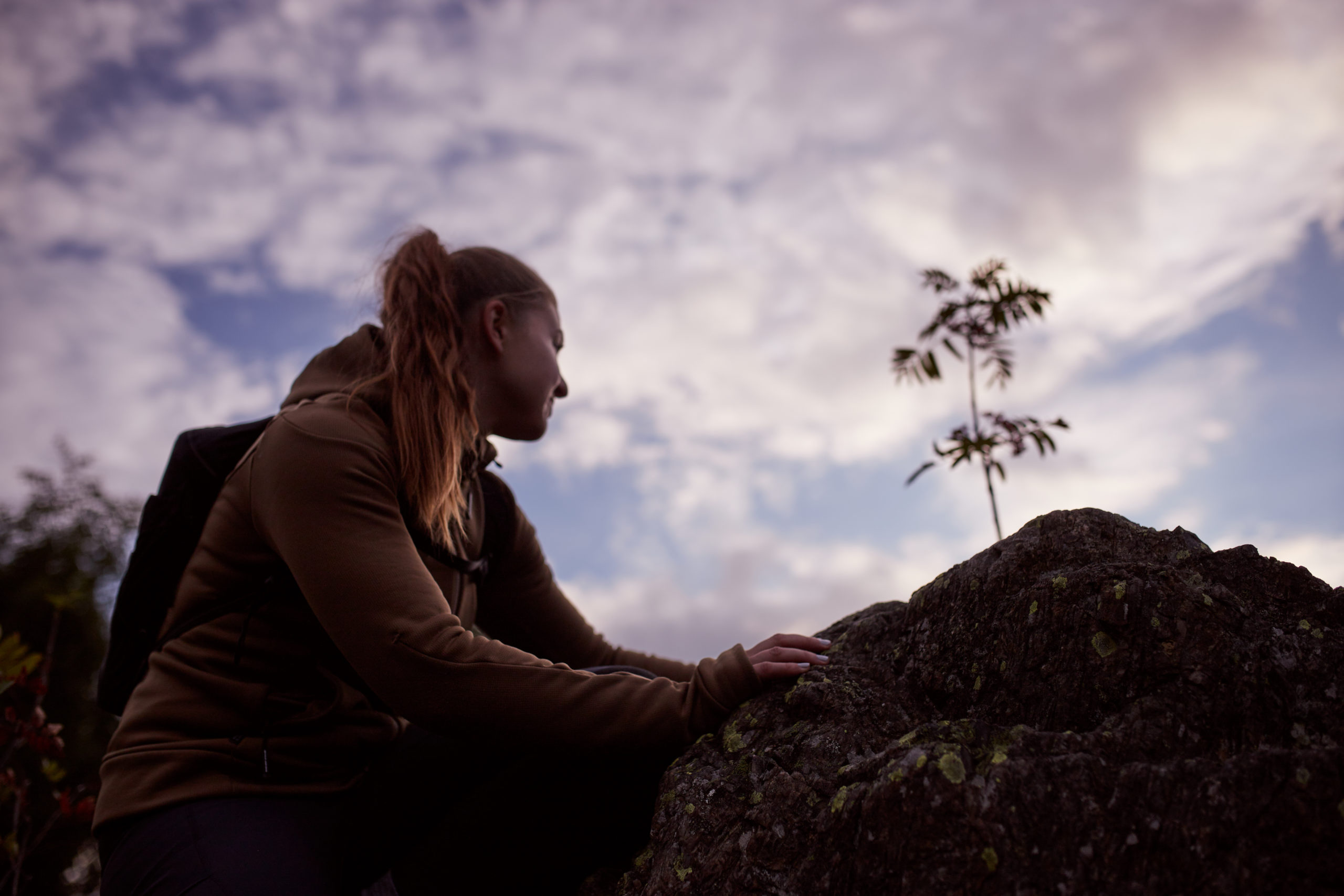 she wanders - Projekt-Harzenssache
