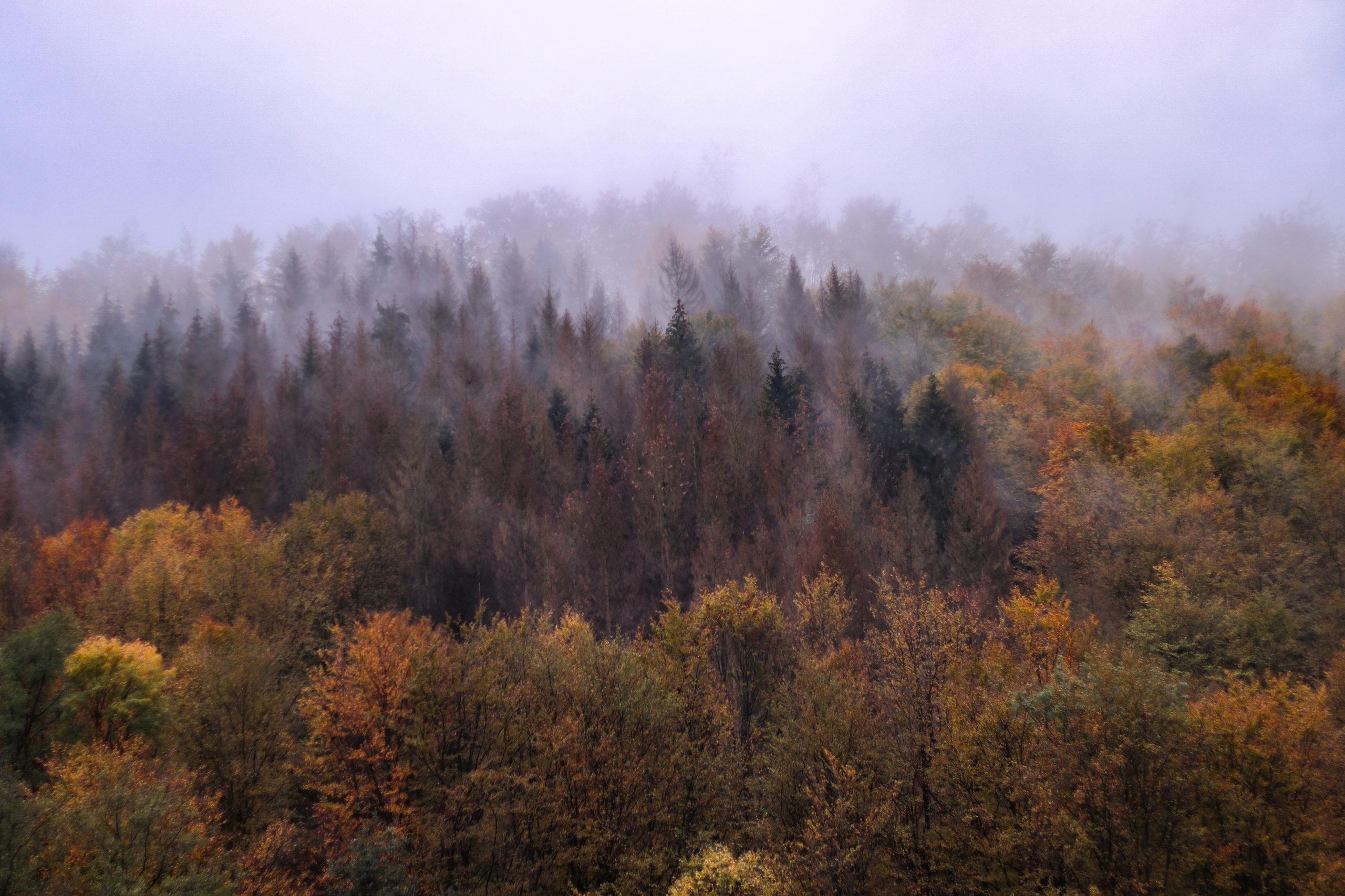 she wanders - Der Harzer Wald im Nebel