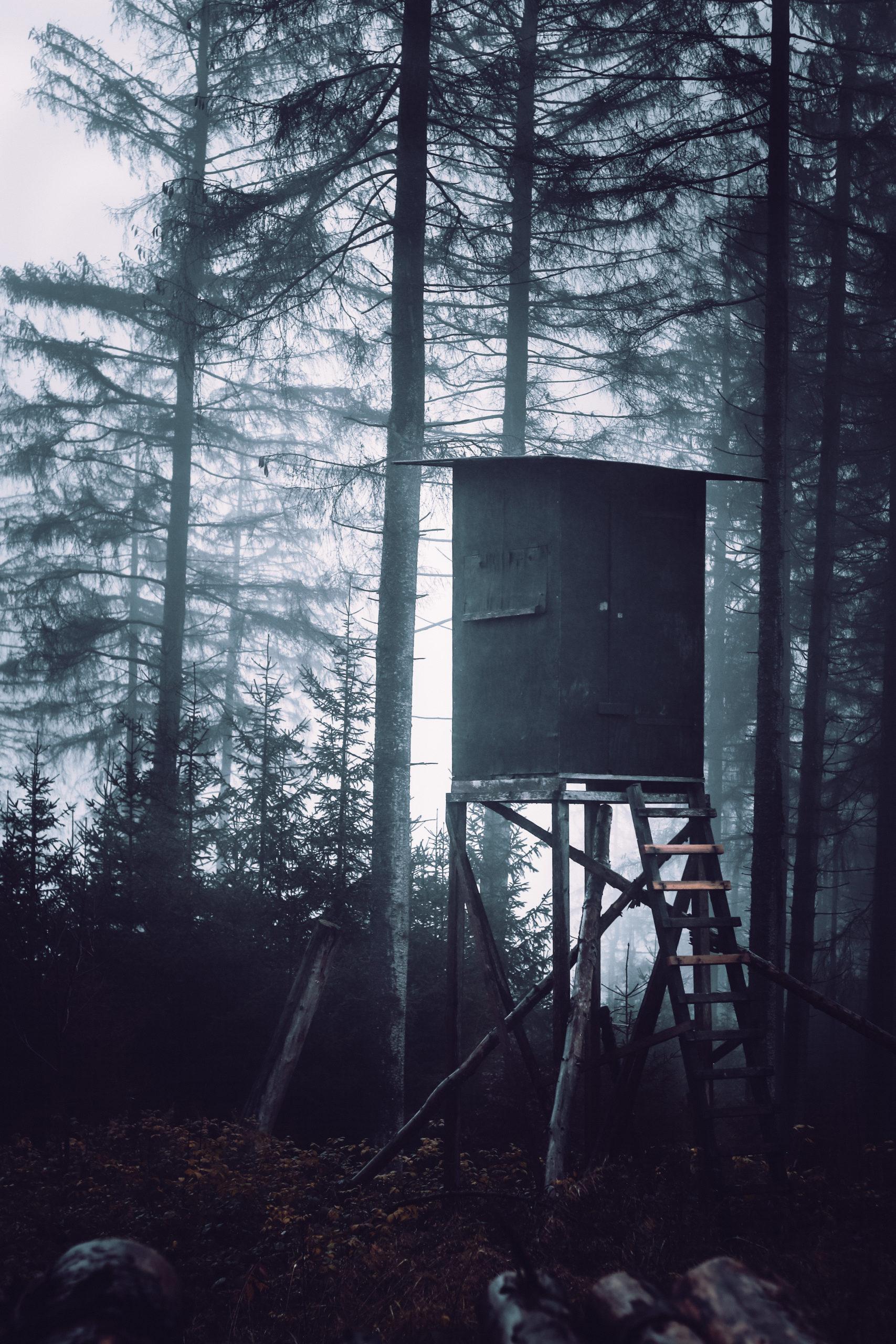 she wanders - Ein Hochsitz für die Jagd im Harzer Wald