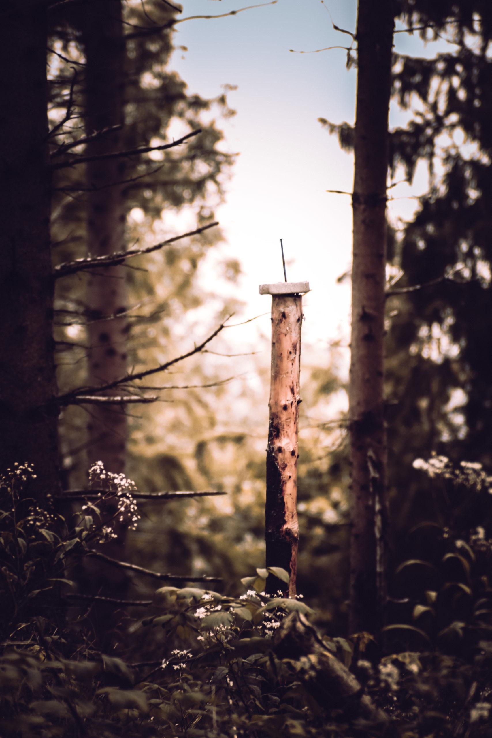 she wanders - Ein Leckstein für Wild im Harzer Wald