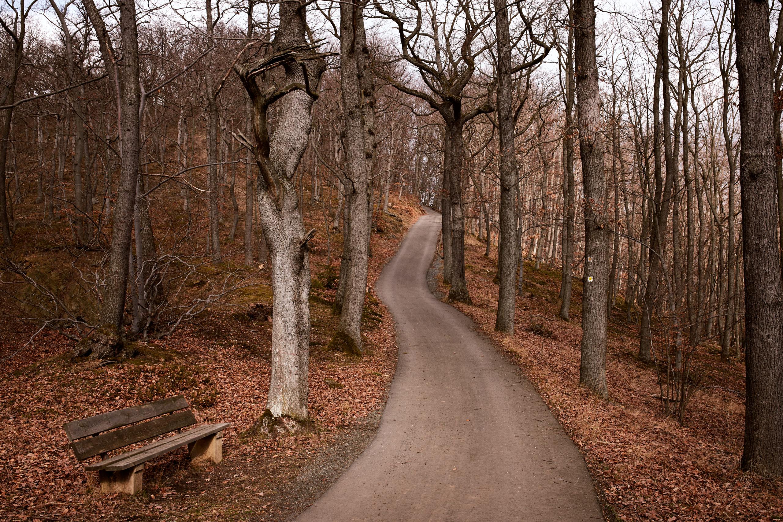 Von-Eichen-umgebener-Weg-zur-Harburg-im-Harz-in-Wernigerode
