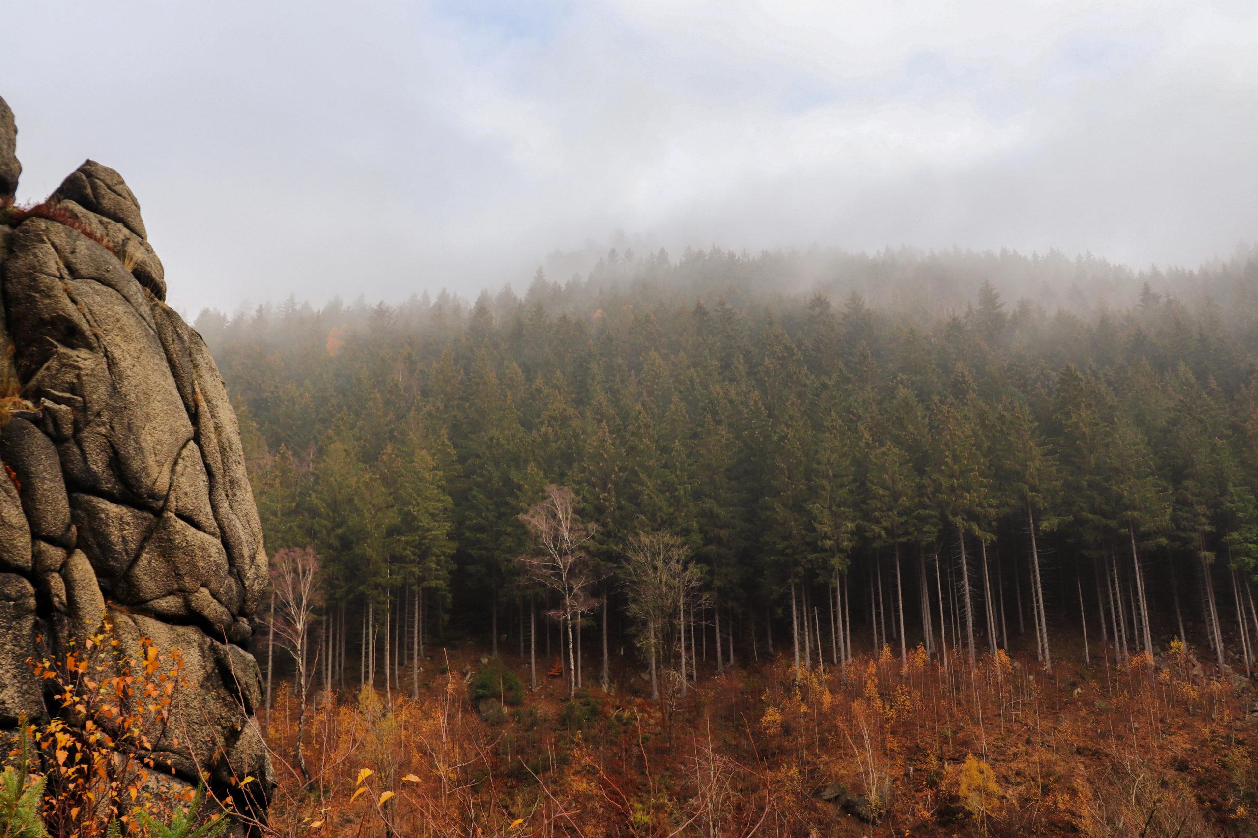 she wanders - Der Wald im Harz