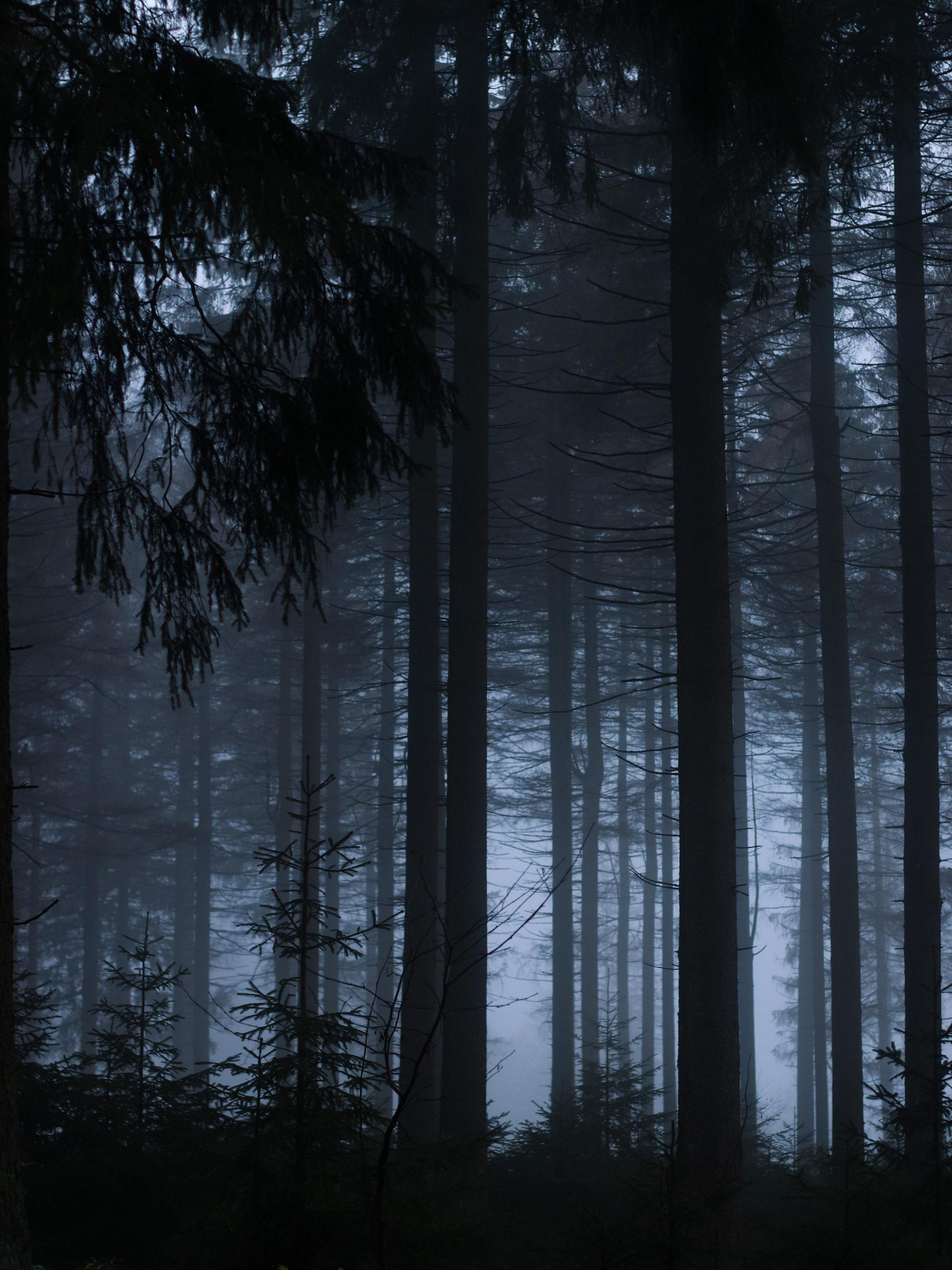she wanders - Ein mystischer Wald im Harz