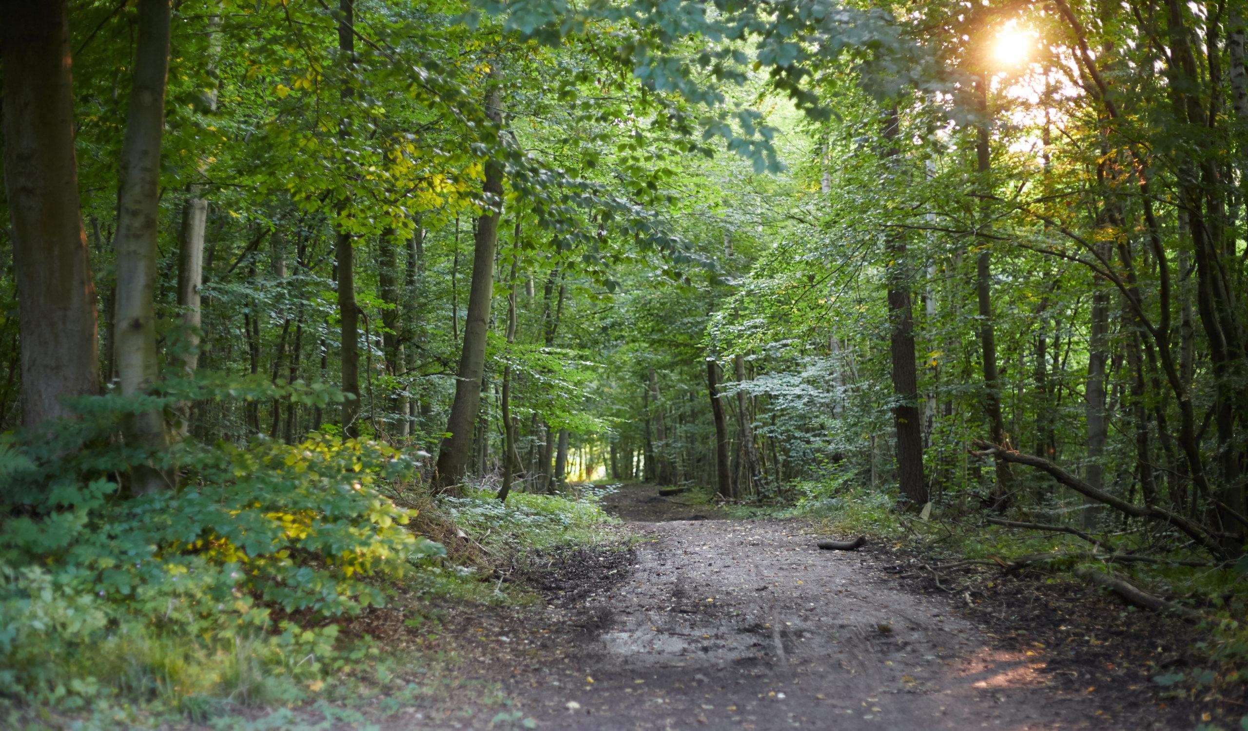 she wanders - Der Harzer Wald im Wandel