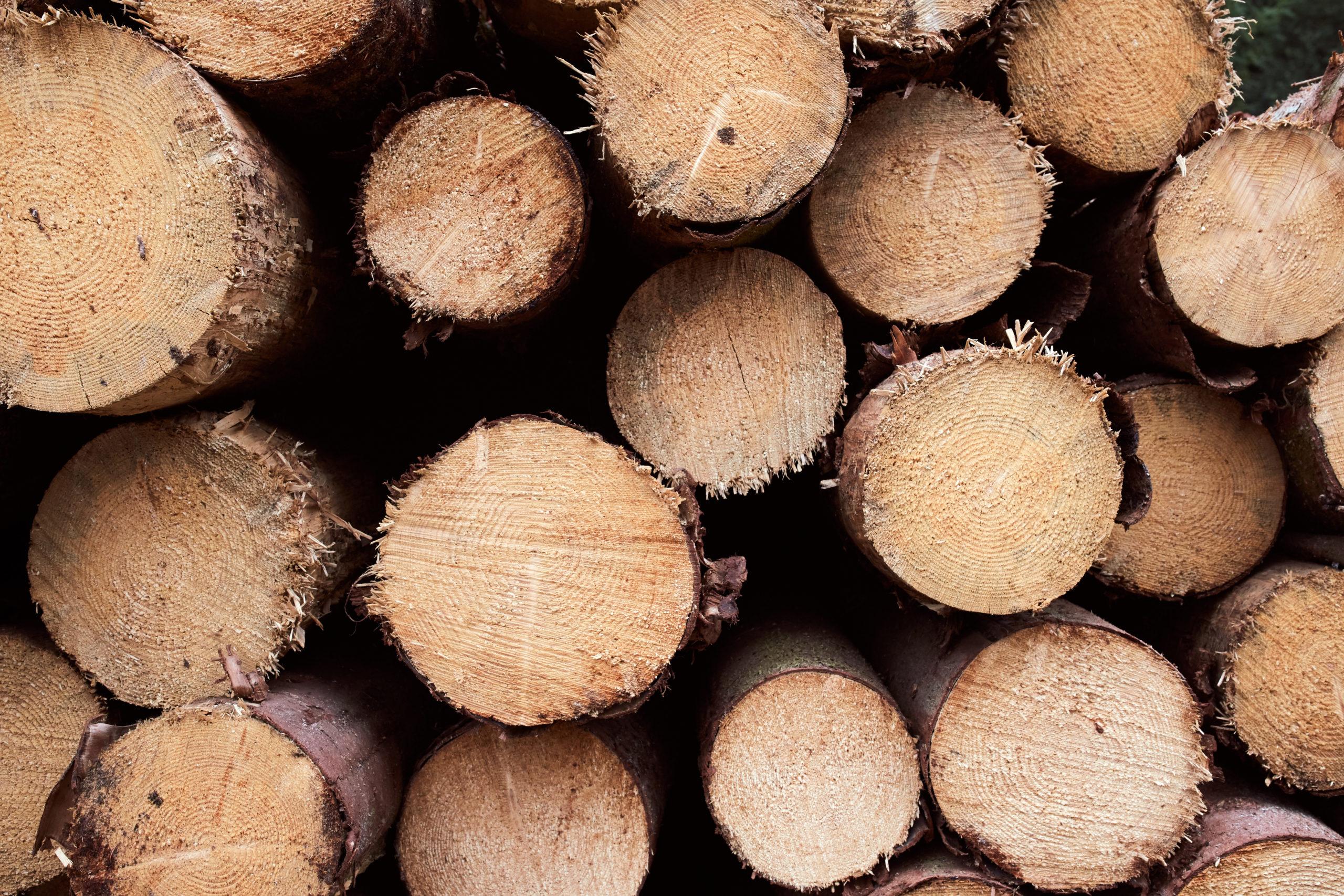 she wanders - Fichten Holzpolter im Harz