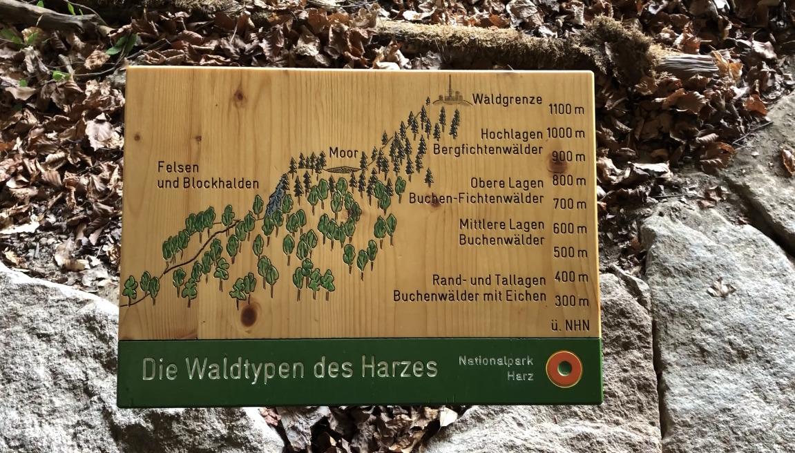 she wanders - Waldtypen des Harzes